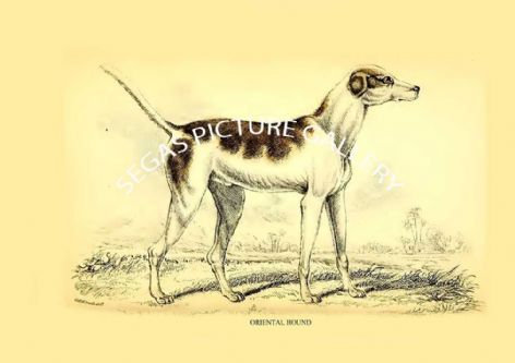Fine art print of the ORIENTAL HOUND  by Sir William Jardine (1839-40)